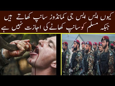 Why SSG Commandos Eat Snakes during the Training in Pakistan